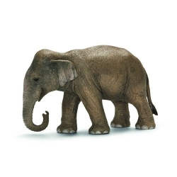 elefante asiatico femmina